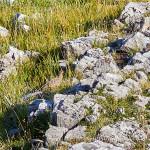 Coturnìce (Alectoris graeca)
