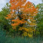 I colori caldi dell'autunno