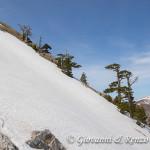 Loricati sulla cresta Nord di Monte Pollino