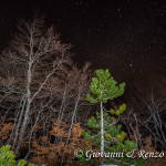 Bosco Pollinello di notte
