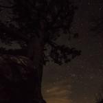 Il patriarca nella notte