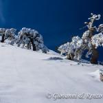 Pini loricati sulla cresta nord di Monte Pollino