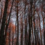 Tramonto nel bosco