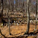 Lame di roccia nel bosco
