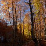 Nel bosco di Valle Fredda