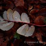 La semplicità e la bellezza di una foglia caduta in autunno
