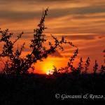 Prugnolo fiorito al tramonto
