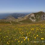 Fioriture nei pressi della cima di monte Vettore