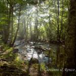 Raggi di luce nel bosco incantato