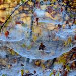 Rugiada d'autunno