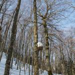 Nido con ingresso bloccato dalla neve