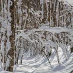 Neve nel bosco plasmata dal sole