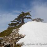 Loricati sulla cresta Sud di Serra delle Ciavole