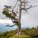 Loricato sulla cresta NO di Serra di Crispo
