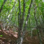 Un tronco trafitto da un cavo d'acciaio