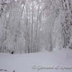 Sulla strada forestale che da Piano Iannace porta a Pitt'accurc'