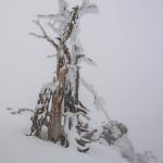 Scheletro di ghiaccio