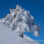 Pino loricato sulla cresta nord di Monte Pollino