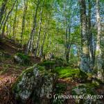Nel bosco di Lago Duglia