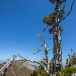 Risalendo la cresta Nord di Serra delle Ciavole