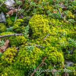 Una foresta in miniatura