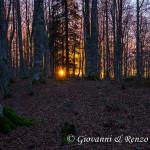 Le ultime luci nel bosco