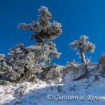 Imbiancati dalla prima neve della stagione