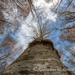 Il gigante che sfiora il cielo con un ramo