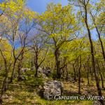 Il bosco di Santa Venere
