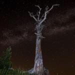 Cielo stellato sul giardino degli Dei