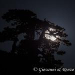 Quando un Pino Loricato cattura la luna