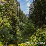 Il lussurreggiante tratto boscoso del sentiero della Dèna