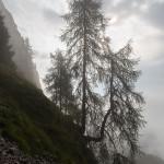 Giganti nella nebbia