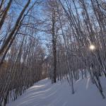 La luce del sole penetra la faggeta subito dopo una nevicata