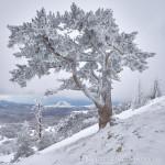 Dipinto con la neve