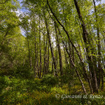 La foresta fiorita