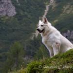 Il cane della gestione del Rifugio Giàf