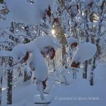Controluce invernale