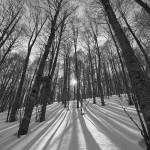 Le ombre infinite