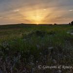 L'alba di una calda domenica estiva nel Parco Nazionale dell'Alta Murgia