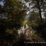 Un raggio di luce nel bosco in autunno