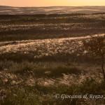 Il lino delle fate brilla sotto i faggi del sole prossimo al tramonto
