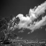 Loricato con la chioma tra le nuvole