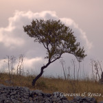 Paesaggi murgiani