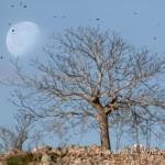 Gli storni sulla luna