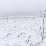 La steppa dopo una bufera